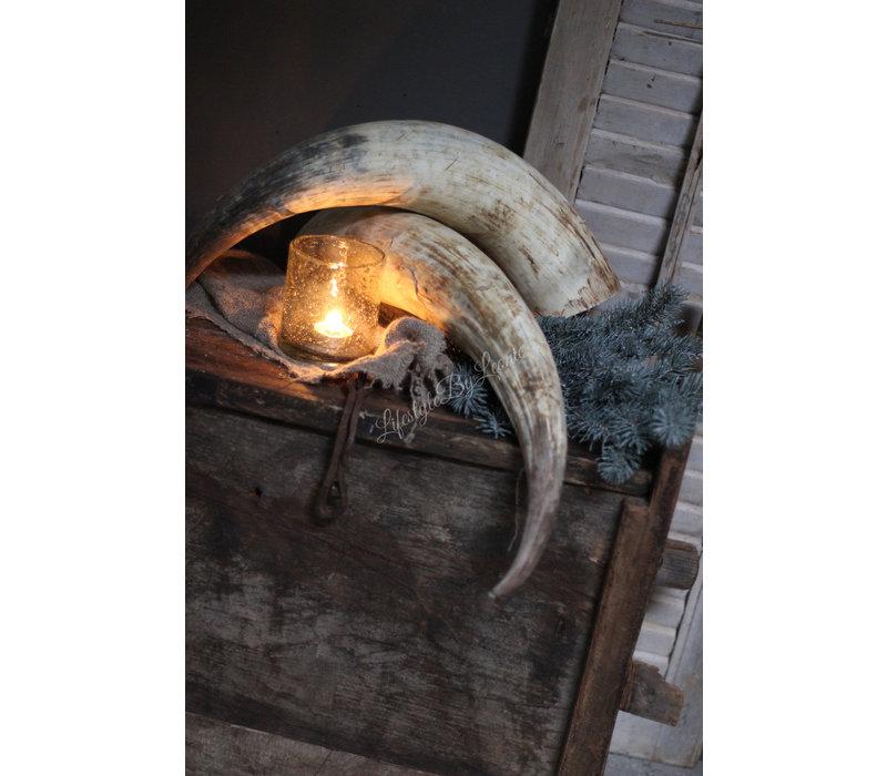 Lange Cow horn 50 - 60 cm