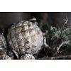 Glazen kerstbal Diamond brown / gold 13 cm