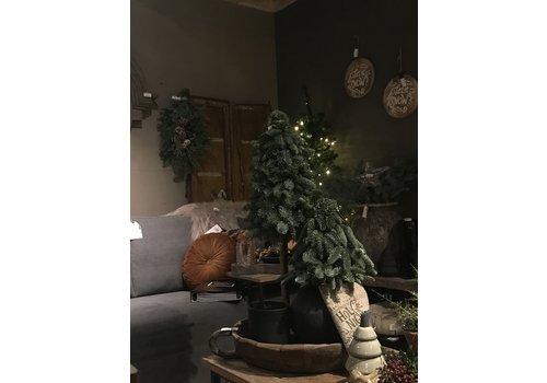 Nobilis boom op stam