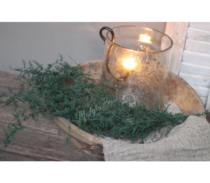 Bos wilde Asparagus green wax 60 cm