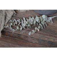 Brynxz zijden Eucalyptus tak light grey 73 cm