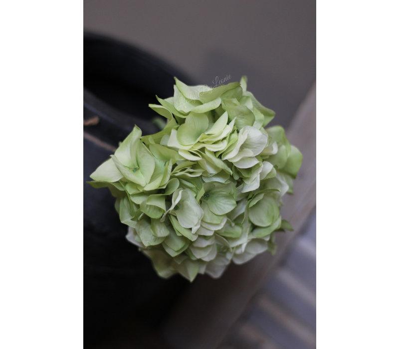 Zijden groene Hortensia tak