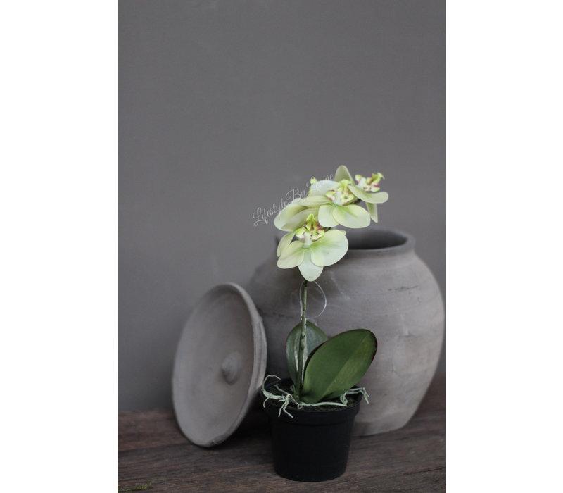 Namaak mini Orchidee in potje green