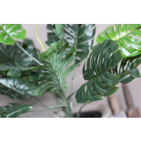 Namaak plant Monstera in pot 75 cm