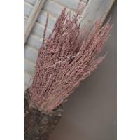 Bos Star grass light pink