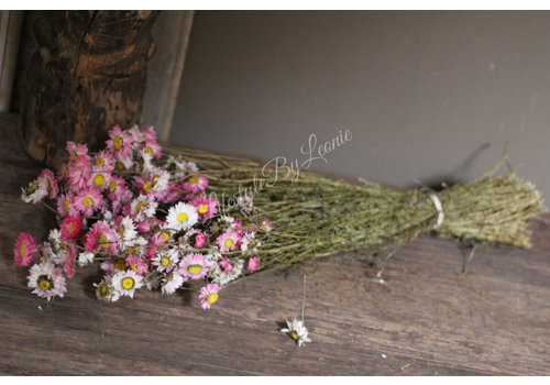 Bos gedroogde Madelief roze wit 50 cm