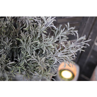 Brynxz namaak sedum Bush frosted
