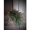 Toef Eucalyptus / Heidelbeer