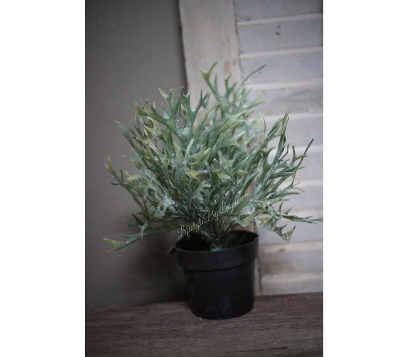 Namaak mini Hertshoorn in pot 25 cm