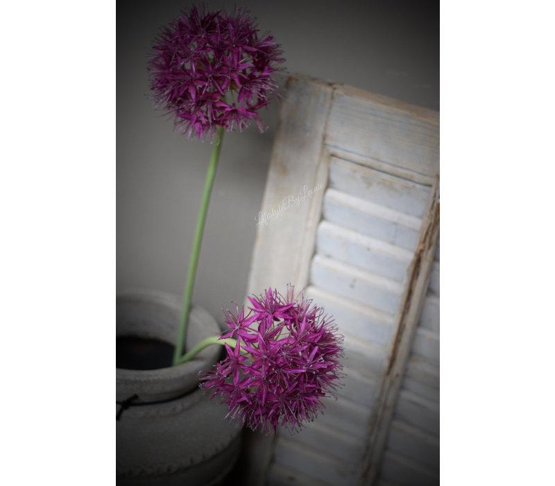 Namaak Allium bloeiend paars 75 cm