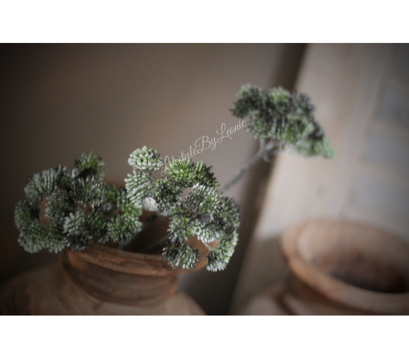 Namaak vetplant Sedum groen 46 cm