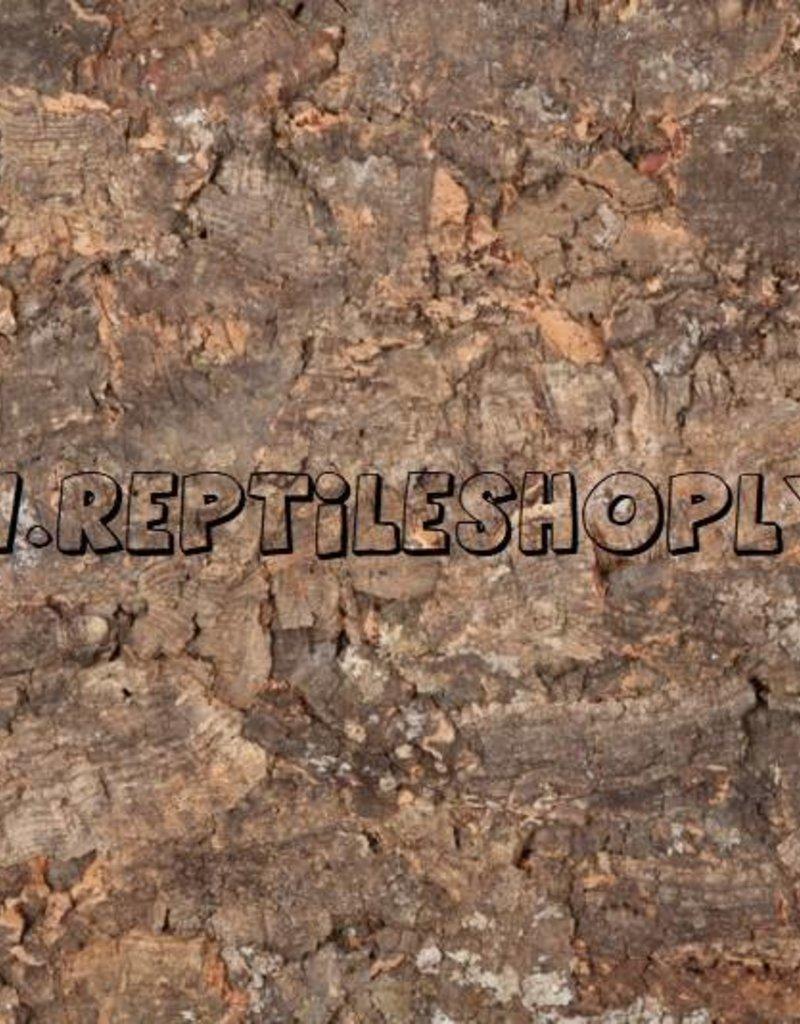 """Terrarium Cork back wall """"FRorest"""" 60 x 90 x 2cm"""