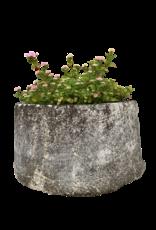 Comedero De Piedra De Un Jardin Francés
