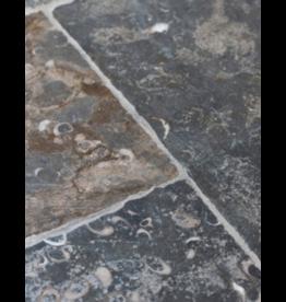 Französischer Fossiler Stein
