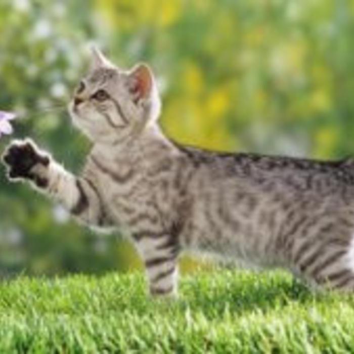 Paardenmelk voor katten