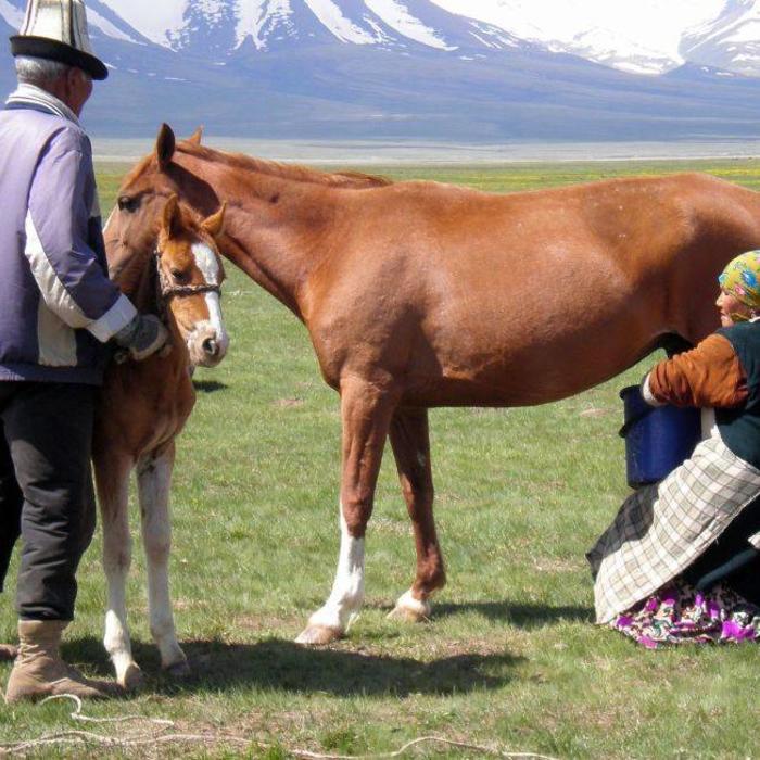 Wat maakt paardenmelk uniek?