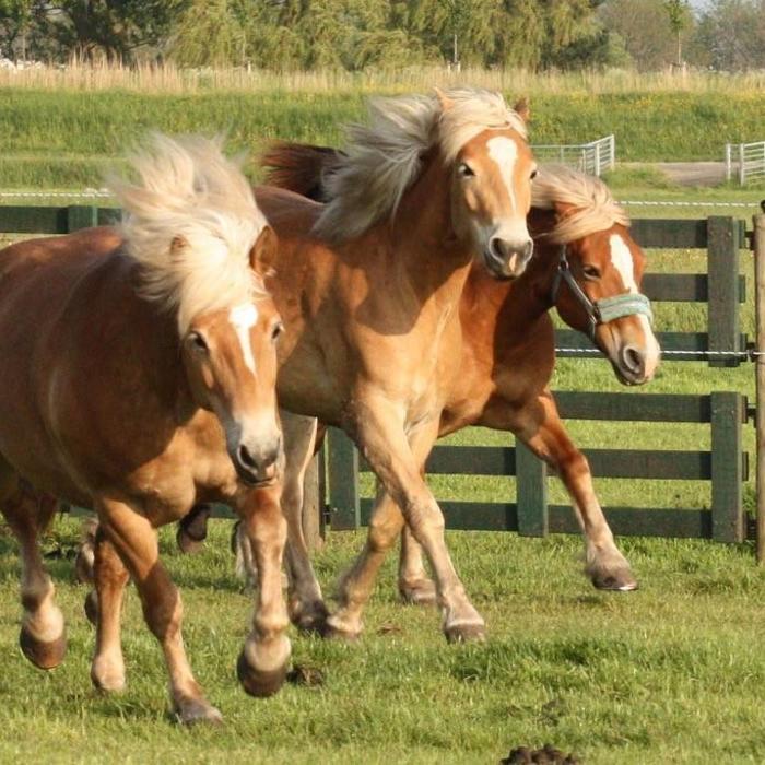 Wat zit er in paardenmelk?