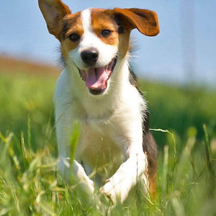 Paardenmelk tegen jeuk bij honden