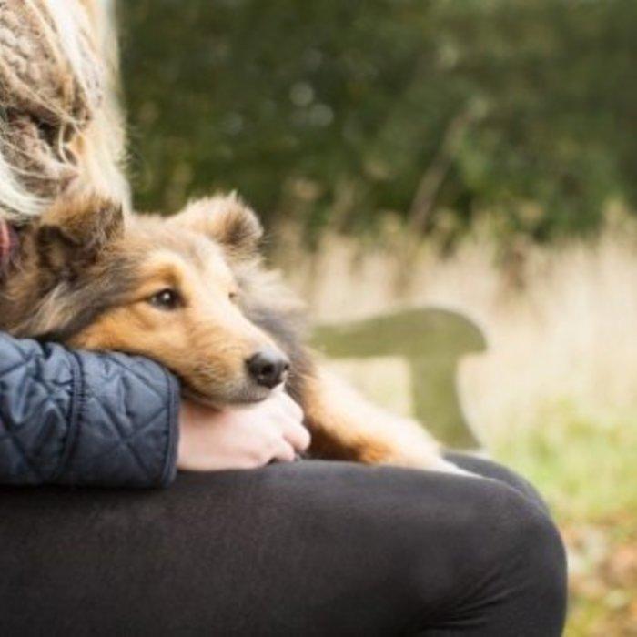 Een hond maar allergisch voor honden?