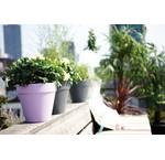 Plantenbakken - UITVERKOOP - tot 50%
