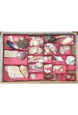 Vintage Victoriaanse Ladekast met  schelpenverzameling