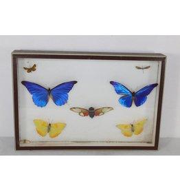 Butterflies in wooden box 39 x 26