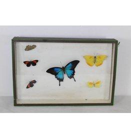 Butterflies in wooden box 39 x 26 nr 2