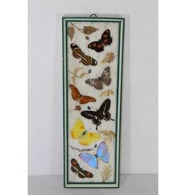 Vlinders in houten lijst Taxidermy