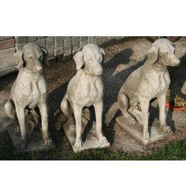 Betonnen Hond Labrador Standenhond Jachthond