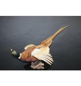 Pheasant mounted flying model
