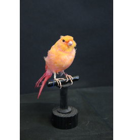 Taxidermy Stuffed Orange canary bird