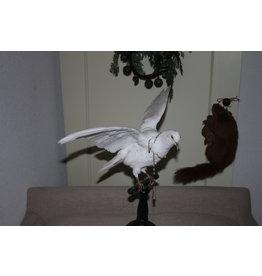 Witte duif op houten voet.