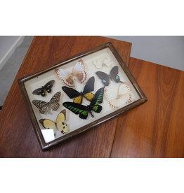 Butterflies in wooden box