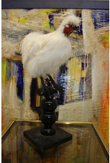 Opgezette Witte Kip Parelhoentje