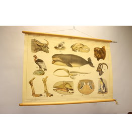 """Zoological poster """"the inhabitants of Carpathians"""""""