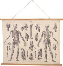 Wandkaart Anatomie Wall chart Anatomy - 100cm x 75cm