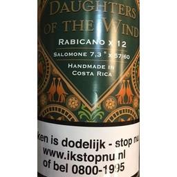 Casdagli  Daughter Of The Wind Rabicano Salomone
