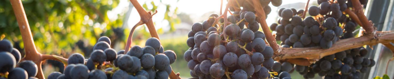 Biologisch - Biodynamisch - Natuur wijnen