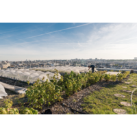 Urban farmers - The now (and how) of growing food in the city