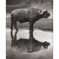Across the Ravaged Land - Nick Brandt