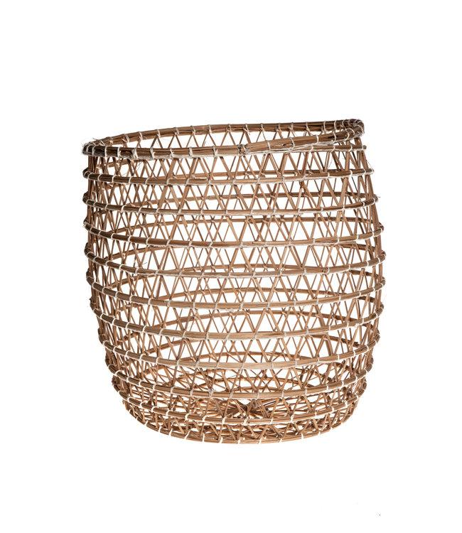 Basket date palm 'Oasis'