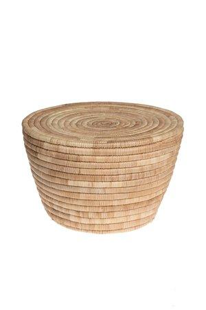 Cone stool palm