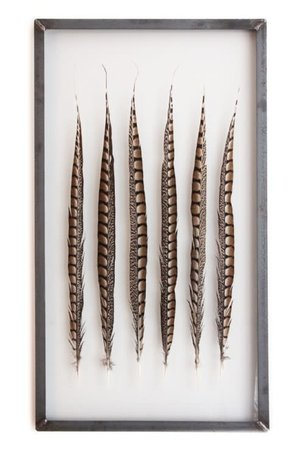 Golden ringneck pheasant feathers