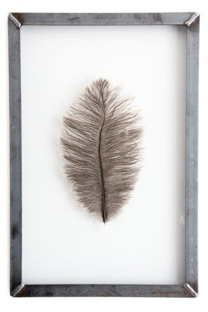 Grey ostrich feather