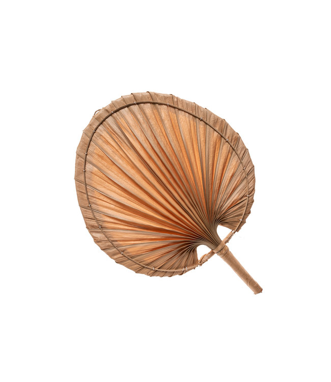 Decorative fan palm  S