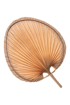 Decoratieve waaier palmblad L
