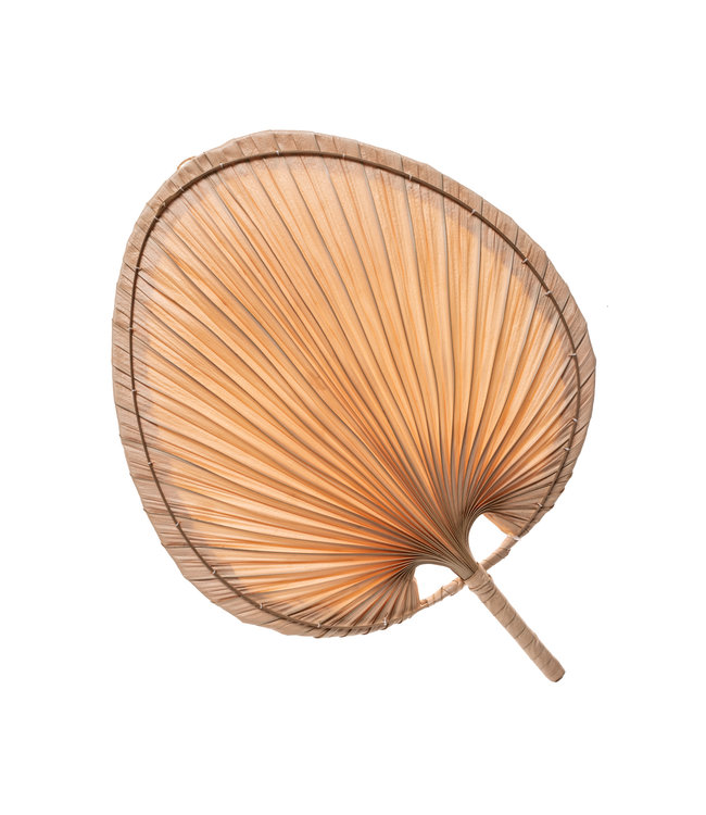 Decorative fan palm L