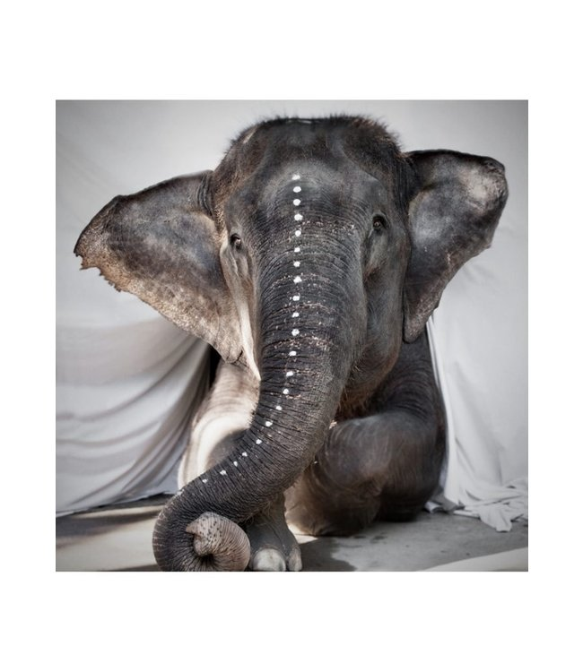 Elephant Adele - fine art paper