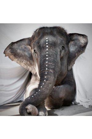 Love Warriors Postcard elephant Adele - fine art paper