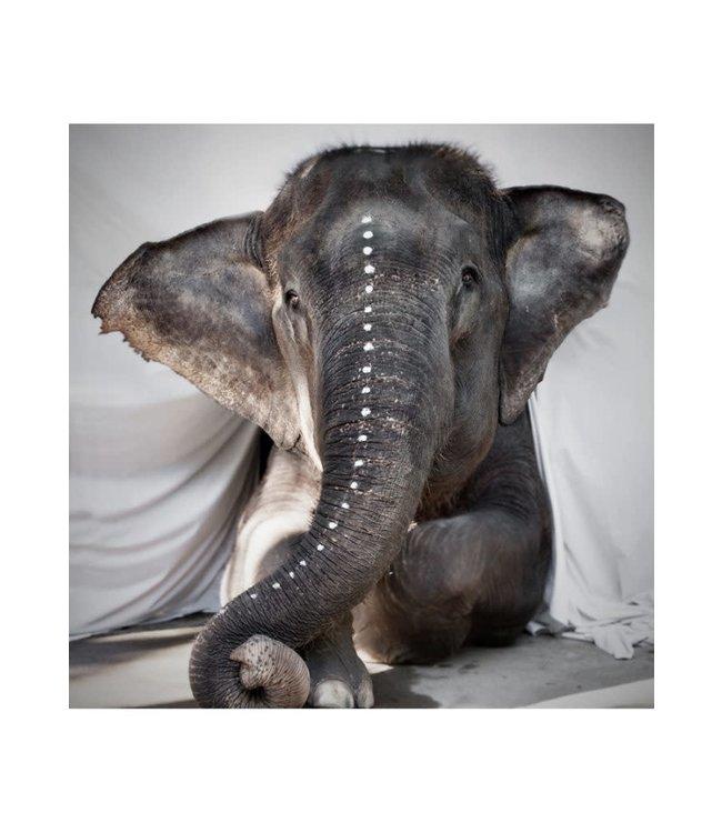 Postcard elephant Adele - fine art paper